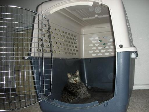 Gray tabby cat sleeping in a large dog kennel