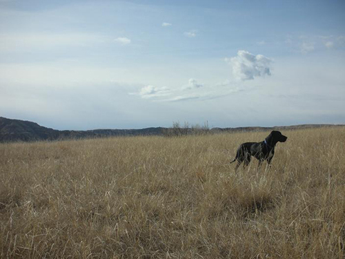 Cute black lab mix standing in a field