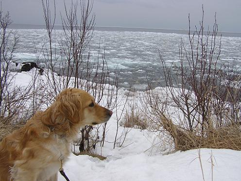 Elsie the light colored golden retriever outside in the snow by Lake Superior