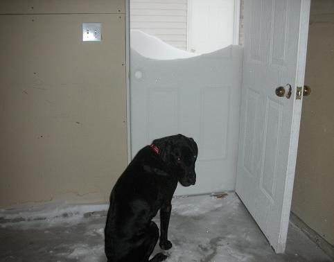 Black Lab Mix With Snow Over His Head At The Door