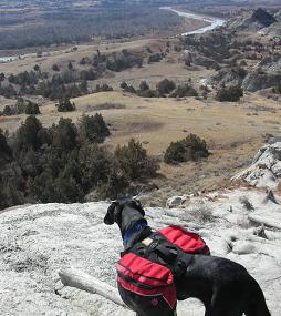 Ace the black lab mix wearing his red Ruffwear dog backpack at Teddy Roosevelt Park