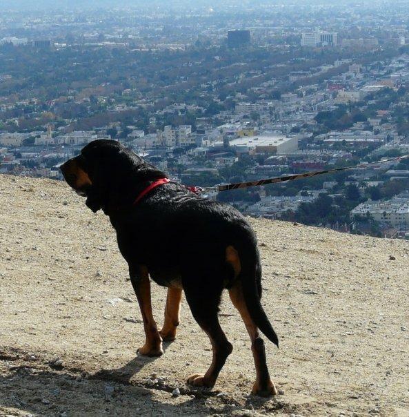 bloodhound1
