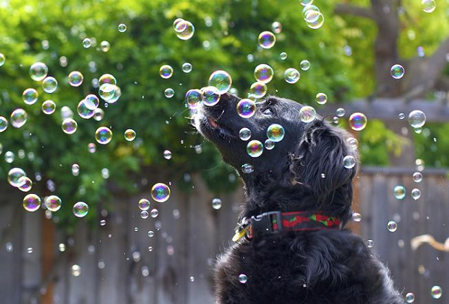 dog-w-bubbles