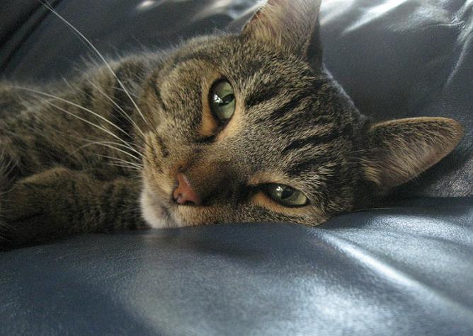 My Cat Is Fat Thatmutt Com A Dog Blog