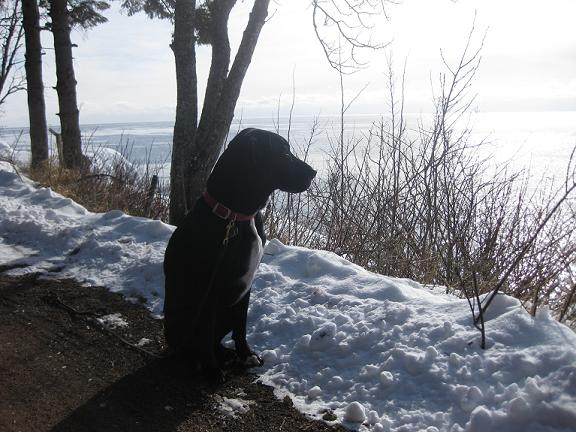 Black lab mix sitting outside, looking over the lake in the snow