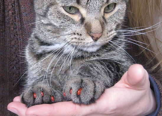 Nail Caps For Cats To Stop Cats From Scratching Thatmutt