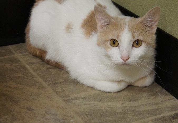 Cute cats and kittens for adoption Fargo ThatMutt.com: A Dog Blog